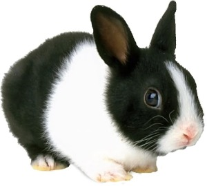 I deliberately chose a picture of a super-cute bunny to put emphasize on the tragic element of Googie's death. I apologize for playing with your emotions.