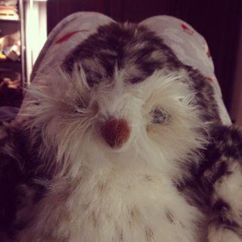 Sympathy owl.
